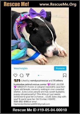 New Jersey American Bulldog Rescue Adoptions Rescue Me
