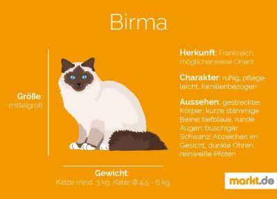 Birma Katze Markt De Katzen Raceportrait Infografik Facts
