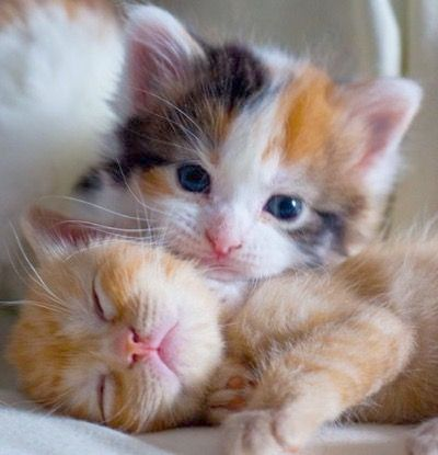 It S Not What It Looks Like Kittens Cutest Cute Cats Cute Cats