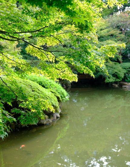 目黒 藤しろ 東京都庭園美術館 じぶん日記 美術館 庭園 日本美術