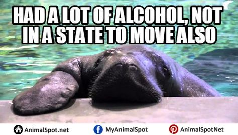 f063b801bead1d7f14a0c51a3af6dcd9 manatees animal memes pictures of manatee memes different types of funny animal memes