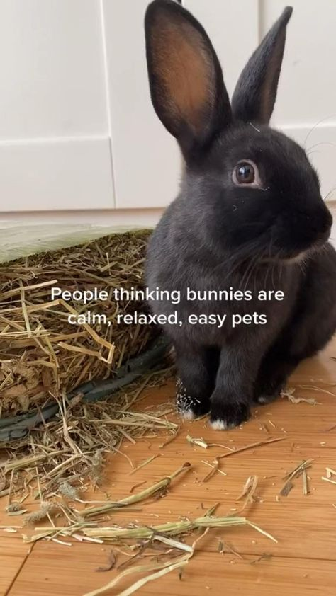 Bunnies are deceiving pets!