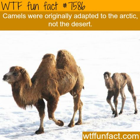 Amazing WTF Fun Facts About Animals That Will Blow Your Mind!
