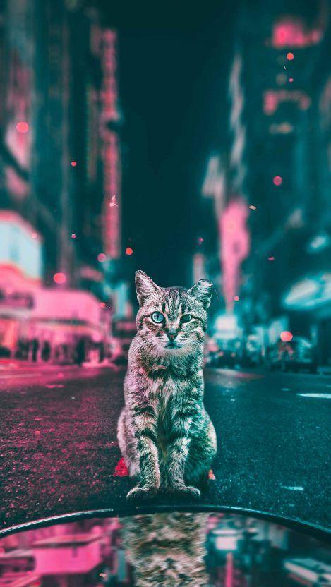 Tropical Cat Iphone Wallpaper Iphone Wallpapers Cute Cat Wallpaper Cat Wallpaper Cats Iphone