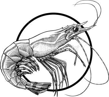 9 best shrimp images on pinterest shrimp food illustrations and prawn rh pinterest com Cartoon Shrimp Clip Art Shrimp Boil Clip Art
