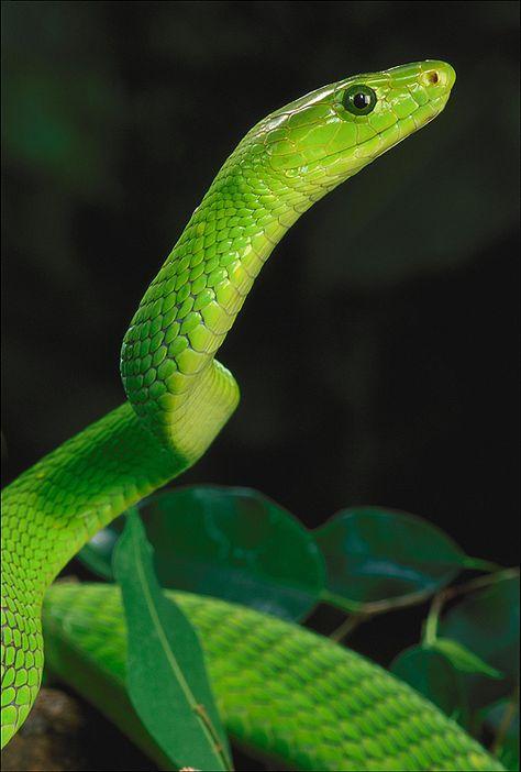 f080b8d47865efac5bdc259e4b808a9e--african-animals-green.jpg