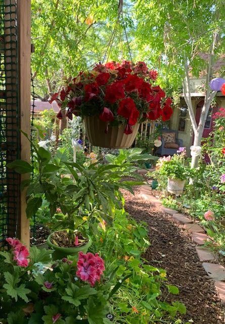 My Enchanting Cottage Garden Hanging Baskets For The Spring Garden Cottage Garden Spring Garden Beautiful Gardens