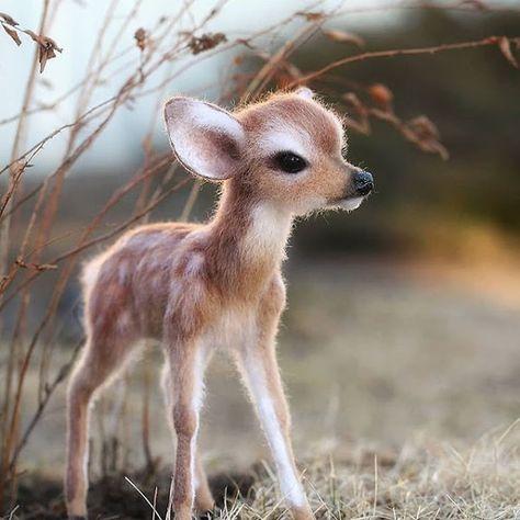 Amazing Wild Life Animals Photography