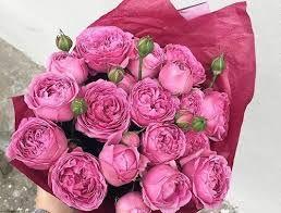 نتيجة بحث الصور عن تحميل مناظر طبيعية متحركة مجانا Plants Flowers Rose