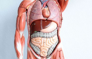 Download Anatomy mnemonics pdf free | Medstudentscorner