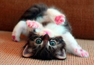Wallpapers Whatsapp Kittens Cute Cat Images For Whatsapp Dp