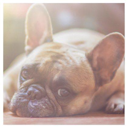 Gorgeous French Bulldog Lying Down Gallery Wrap Bulldog Puppy