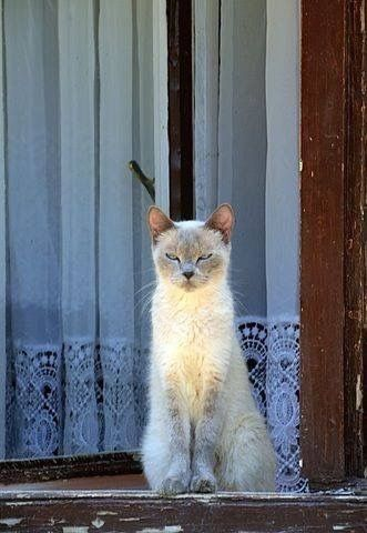 Things You Didn T Know About The Himalayan Cat Cat Breeds Beautiful Cats Cat Breeds Siamese