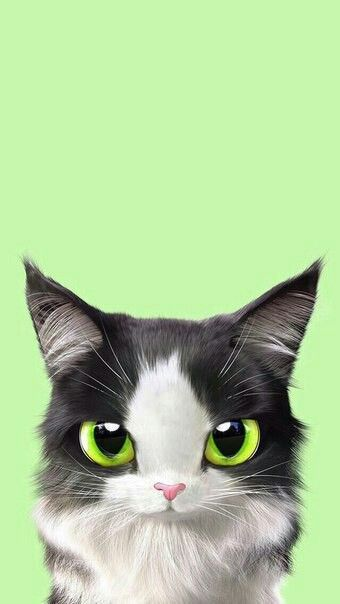 Greene Eyes Kitten Wallpaper Petit Chaton Aux Yeux Vert Fond D Ecran Pour Telephone Monchatdore Com Illustration De Chat Petit Chaton Chats Adorables