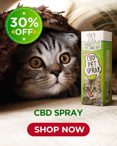 Pin On Cbd For Pets