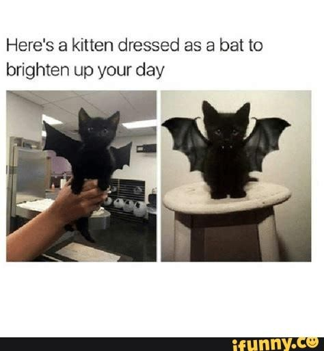 Here S A Kitten Dressed As A Bat To Brighten Up Your Day Ifunny Cute Funny Animals Funny Animals Cute Baby Animals