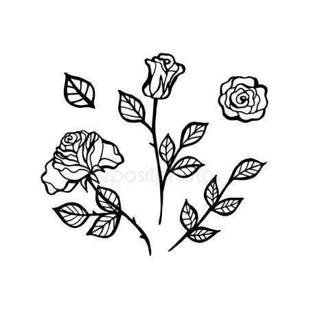 Black And White Line Drawing Of Rose Flower Tattoo Design Sketch Stoc Aff Drawing Rose Line Black Ad Strichzeichnung