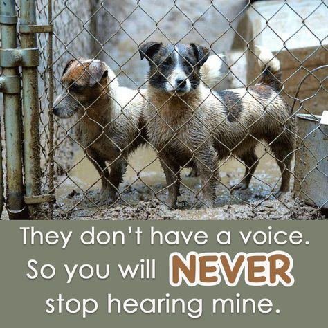Please REPIN and help make a difference for puppy mills dogs: https://www.facebook.com/saynotopuppymills