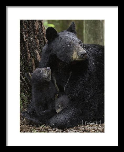 A Mothers Love Framed Print by Chris Norcott. All framed prints are professionally printed, framed, assembled, and shipped within 3 - 4 business days and delivered ready-to-hang on your wall. Choose from multiple print sizes and hundreds of frame and mat options.