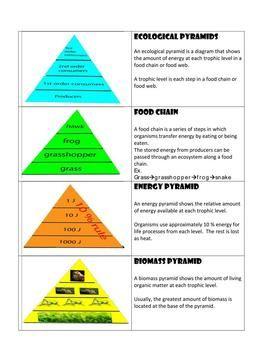 Ecological Pyramid Model Lesson Biomass Energy And Food Chains Ecological Pyramid Pyramid Model Pyramids