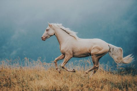 Melancholy Hill – Equine by Wengdahl
