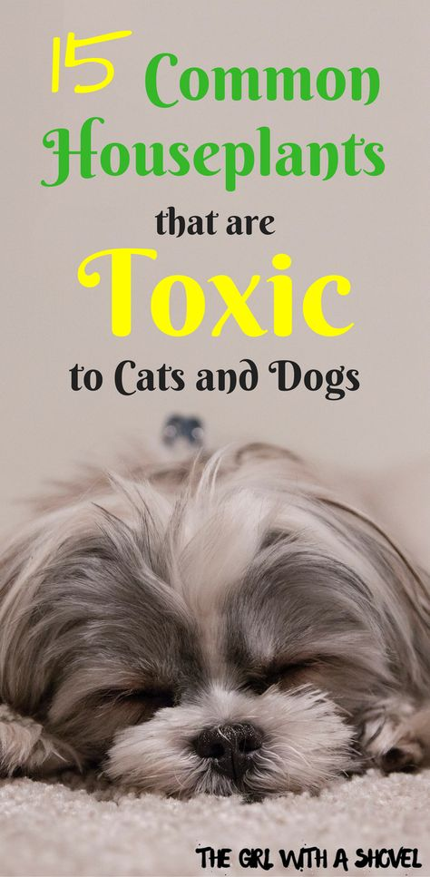Poisonous Interior Plants For Dogs Cats Cat Plants Plants Poisonous To Dogs Toxic Plants For Cats