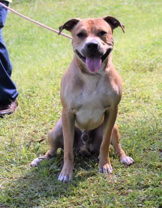 Adopt Brando On With Images Dog Adoption Dogs Training Your Dog