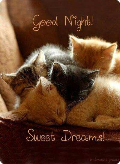 Good Night Goede Nacht Slaap Lekker Slaap Zacht