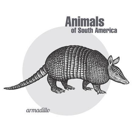 Armadillo Hand Drawing Animals Of South America Series Vintage Armadillo Art Animal Illustration Animal Drawings