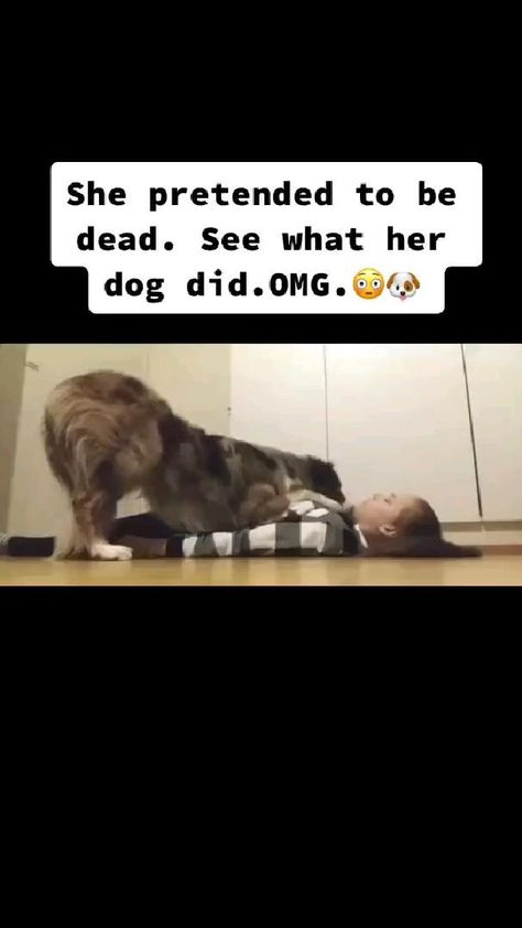 She Pretend to be dead ....see what her dog did...OMG 😮😮😮