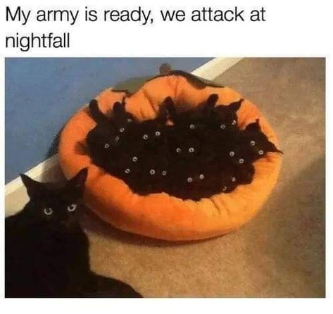 26 Caturday Memes To Remind You Who The Boss Is - Memebase - Funny Memes