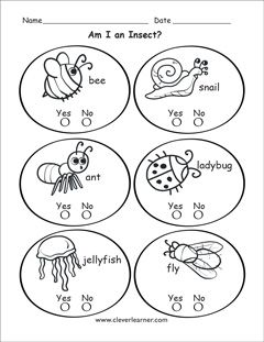 Insect identification for kindergartens | Worksheets kg | Insect ...