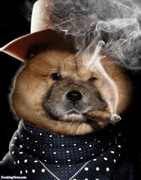 Pin On Big Fluffy Teddy Bear Dogs