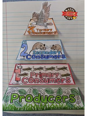 Kate's Science Classroom Cafe: Exclusive Blog Follower Freebie!