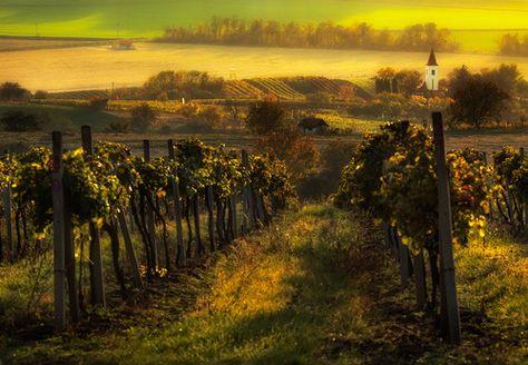 The Mesmerising Beauty Of Moravian Fields Photographed By Marcin - The mesmerising beauty of moravian fields photographed by marcin sobas