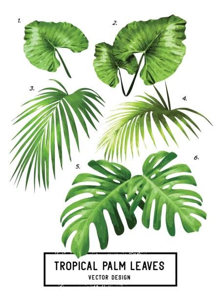 Palm Leaf Illustrations Royalty Free Vector Graphics Clip Art Istock Leaves Vector Leaf Illustration Palm Leaves Vector tropical floral botanical flowers. palm leaf illustrations royalty free