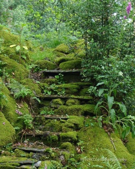 "Photography English Garden Fairy Fine Art Photography Emerald Moss Romantic steps hidden secret fern woodland abandoned magic ""Fairie Stair"" At the bottom of Wordsworth's [. Landscaping Ideas, Garden Landscaping, Landscaping Borders, Florida Landscaping, The Secret Garden, Hidden Garden, Secret Gardens, Woodland Garden, Garden Paths"