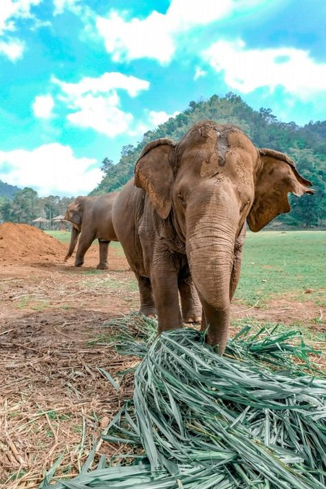 Visiting Elephant Nature Park in Chiang Mai