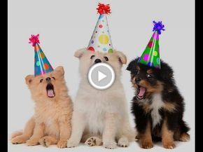 Happy Birthday Funny Video Dogs Song Happy Birthday To You With