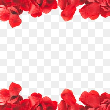 Rose 04 Jpg 6889 5043 Red Rose Png Rose Flower Png Red Roses