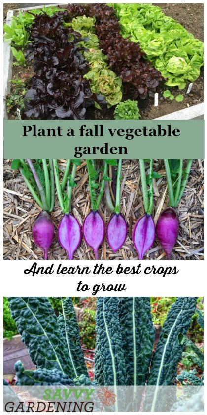 Plant A Fall Vegetable Garden For An Extended Harvest Vegetable