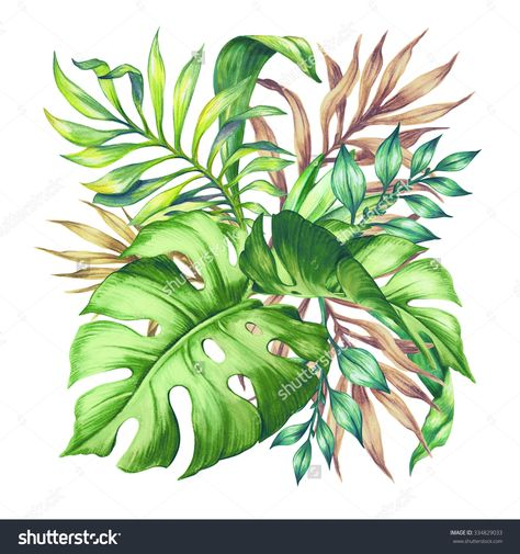 Watercolor Tropical Green Leaves, Isolated On White Background Stock Photo 334829033 : Shutterstock