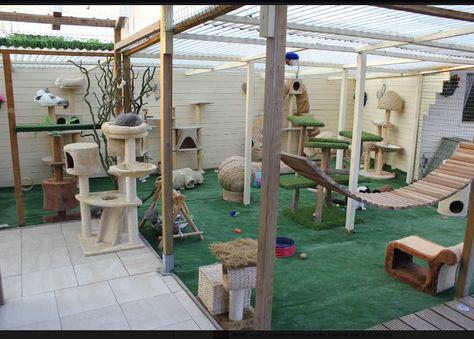 fantastic #cat #enclosure!