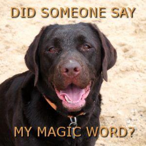 Your Labrador S Magic Word Labrador Magic Words Unique Cats