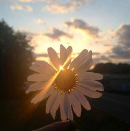 33 Ideas For Flowers Quotes Tumblr Daisies Quotes Flowers Nature Pictures Flower Quotes Flowers Photography