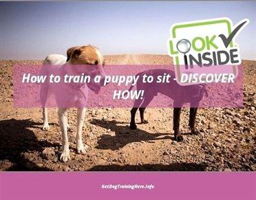 Dog Training Tricks Instinct Dog Training Nyc Dog Training
