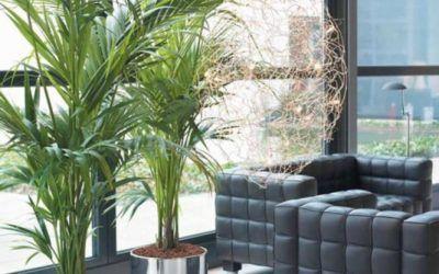 Plantas Trepadeiras Ornamentais Para O Jardim Ideias De