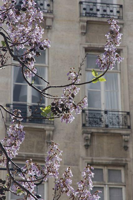 Signs of spring in Paris by Peter uit Haarlem on Flickr | tumblr      ᘡղbᘠ
