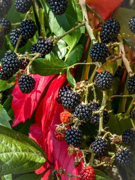 rencontres blackberry)