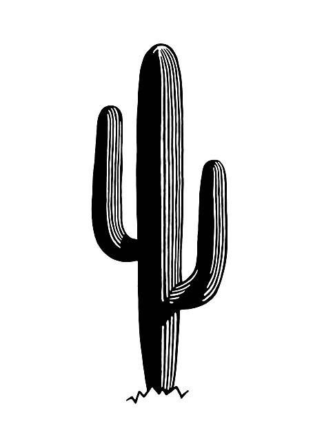 Saguaro Cactus Vector Art Illustration Keramik Cactus Cactus Illustration Cactus Vector Vector Art Illustration